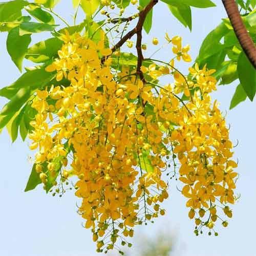 Thoughts And Messages On Vishu And Puthandu Vazthukal – Chithirai 1