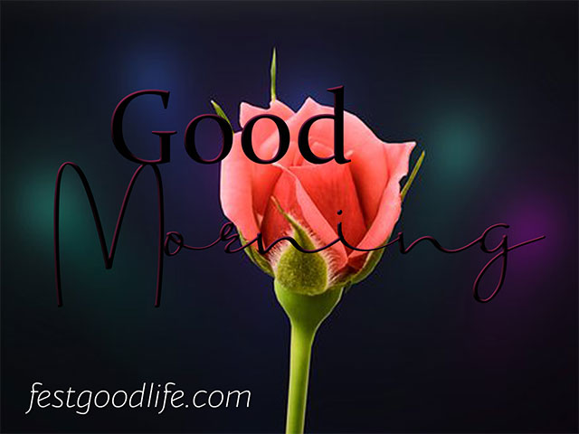 flowers hd very good morning images