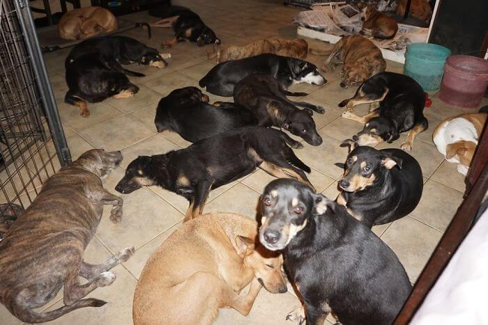 Woman Has Sheltered 97 Stray Dogs In Her House In The Bahamas To Protect Them From The Category 5 Storm
