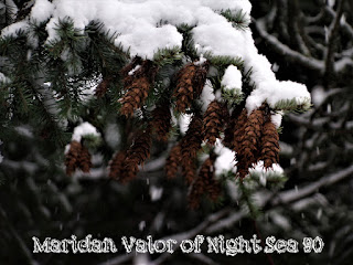 A Few Of My Favorite Things; Random Pictures, snow covered pine cones