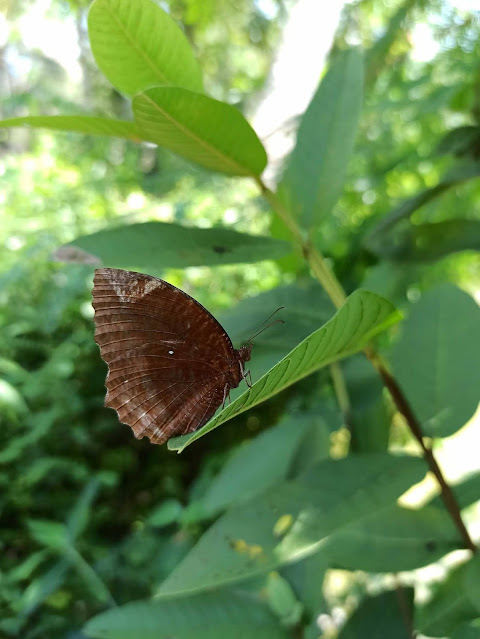 Adult-butterfly_Metamorphosis-of-butterfly_butterfly-life-cycle