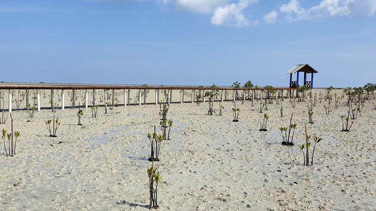 Desa Wisata Terong  Terong Tourism Village