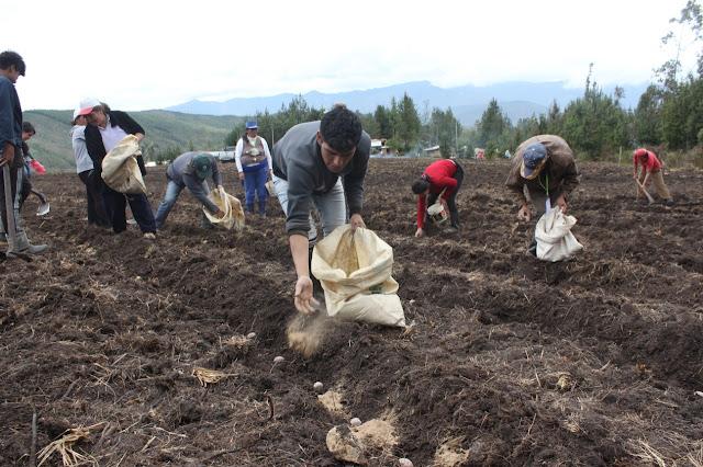 agricultor usando guano de las islas