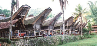 Massomba Tedong, Tradisi Unik Masyarakat Toraja
