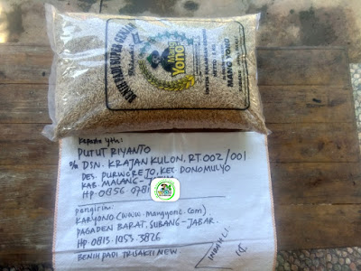 Benih padi yang dibeli PUTUT RIYANTO  Malang, Jateng. (Sebelum packing karung ).