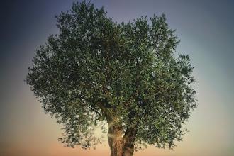 Ειρήνη των Λαών, Αντώνης Περδικάρης