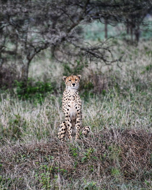 Serengeti National Park safari na Tanzânia