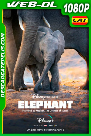 Elephant (2020) 1080p WEB-DL Latino – Ingles