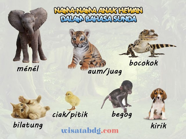 Mengenal Nama-Nama Anak Hewan dalam Bahasa Sunda