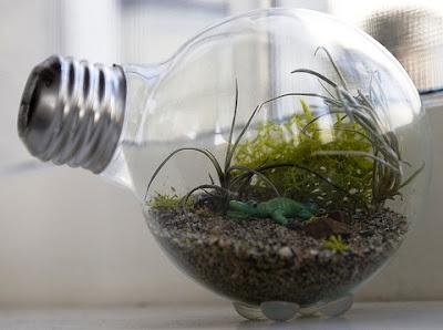 Terrarium Mini dari Lampu Pijar Bekas – Membuat Hiasan Unik