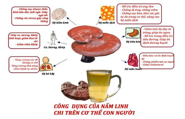 Tác dụng của nấm linh chi với người ốm