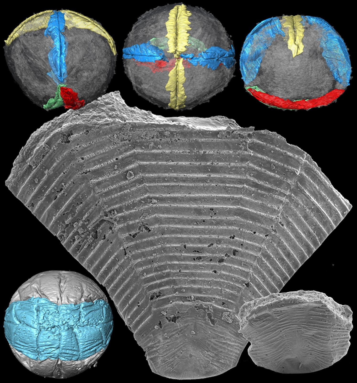 Fossil orphans reunited with their parents after half a billion years