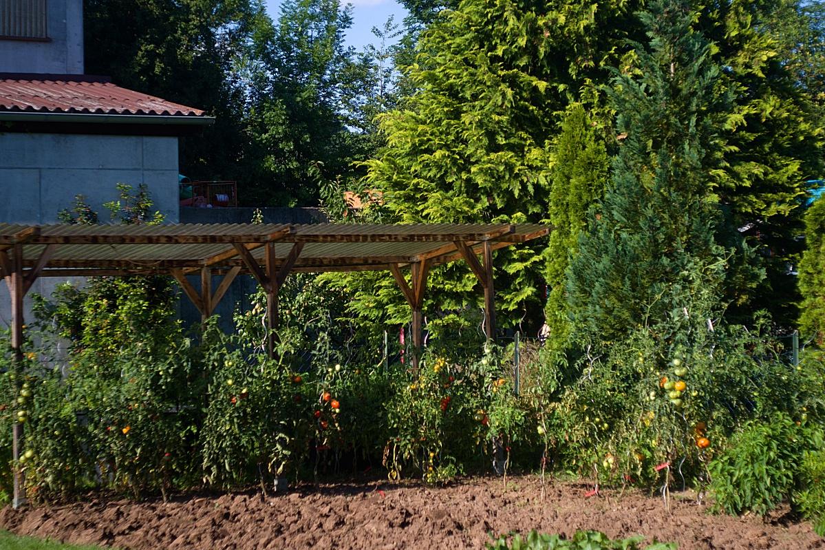 #281 Auto Revuetar f2.8 50mm - Was aus den Tomatensämlingen geworden ist