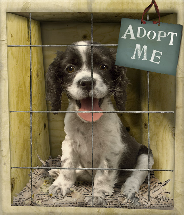 adoption pets shelter adopt dogs puppies animal dog shelters looking animals pet rescue pound adoptions adopted adoptable need cute adopting