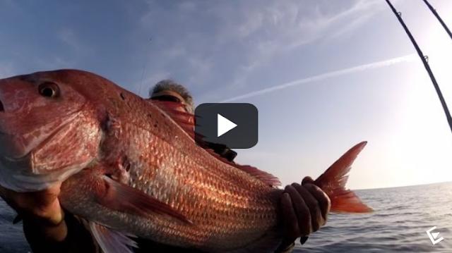 Το ψάρεμα που θα ζηλέψει κάθε ερασιτέχνης ψαράς (video)
