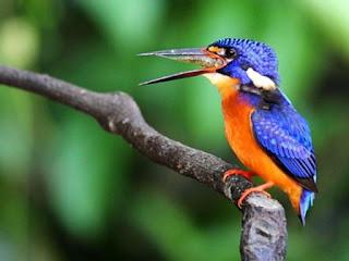 Jenis-jenis hewan yang dilindungi di Indonesia