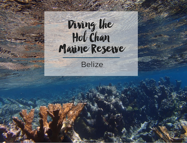 Diving the Hol Chan Marine Reserve // Belize