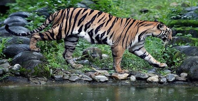 Valmiki Nagar Tiger Reserve - West Champaran District - Bihar Tourism
