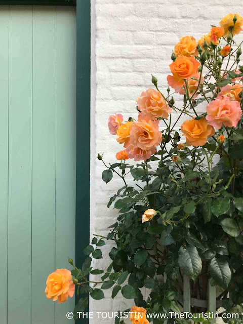 Yellow roses grow in front of a white facade next to a light green wooden door