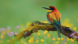 Flowers and birds desktop wallpapers.