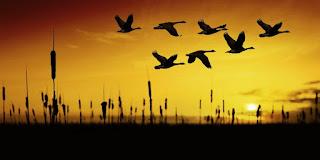 La orientación es básica en la migración de las aves