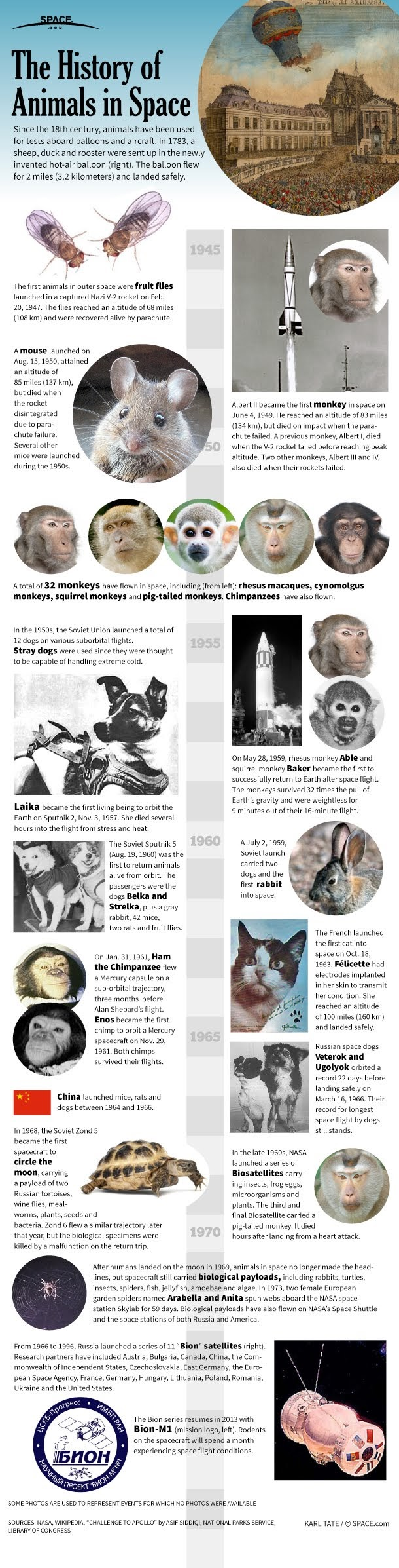 A History of Animals in Space #Infographic