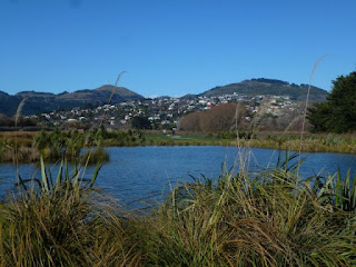Wetland area Cnr Sparks and Henderson's Road