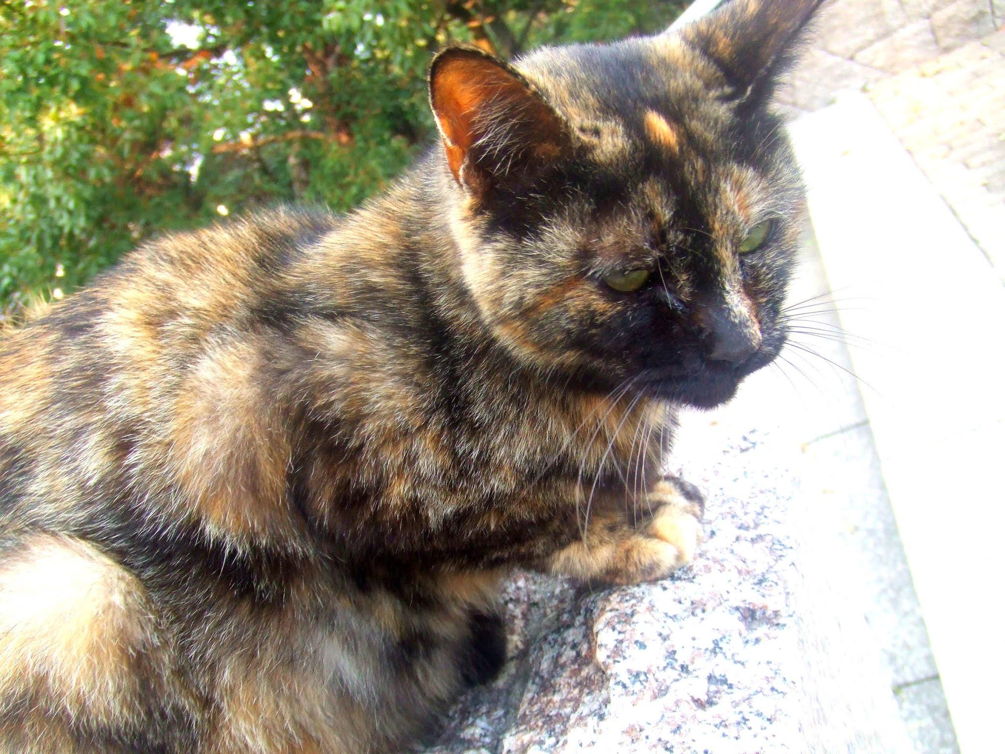 猫さんの全体の写真です。サビ猫さんの、ちょっと背中を丸めたかわいいポーズ。猫ブログなどにどうでしょう。