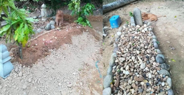 Sejak Hari Pertama Kematian Hingga Tahun Ke 2, Kucing Ini Selalu Setia Ziarahi Makam Tuannya