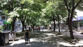 Linden Tree, Street, Yambol, Yambol City Centre,