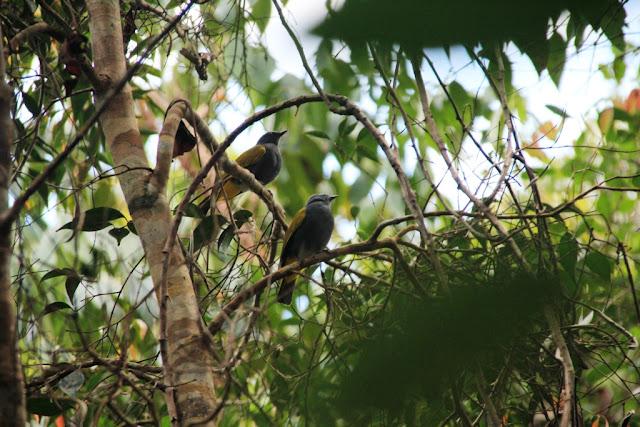 Habitat Burung-burung