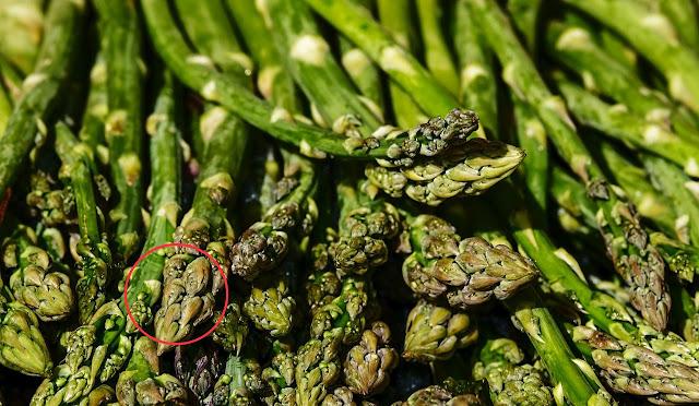 Sayuran Rebung Asparagus