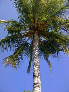 manfaat air kelapa untuk wanita hamil