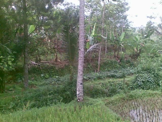 Foto(5719) dijual tanah / jual tanah murah di taman bunga nusantara-sukaresmi 3,1 ha jual tanah di sukaresmi jual tanah di taman bunga nusantara