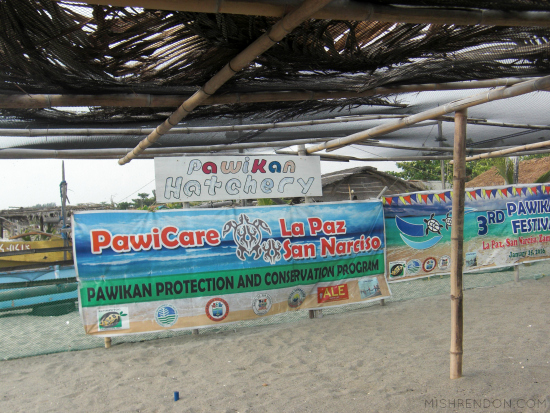 When in Zambales - Releasing Sea Turtles at PawiCare Hatchery