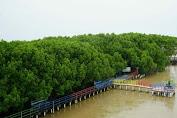 Kabupaten Brebes Kini Miliki Desa Wisata Bahari Manggrove