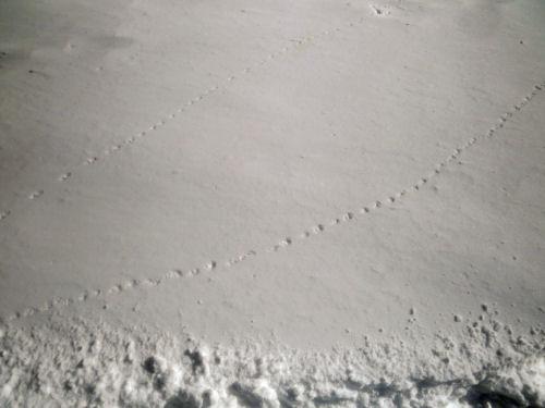snowball track
