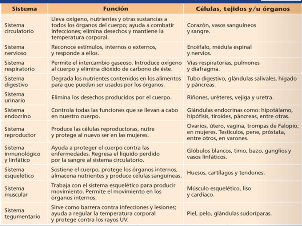 Análisis de Lectura - Órganos y Sistemas
