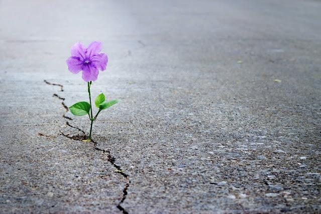 البحث عن أمل حيث لا أمل