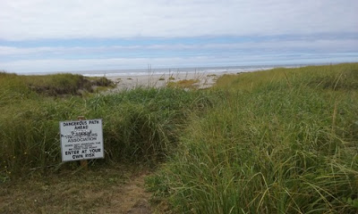 Beach Grass - NVanBlaricom