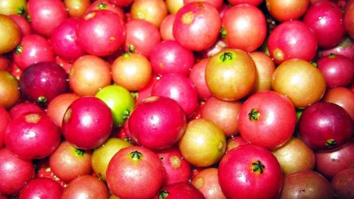 buah cerry