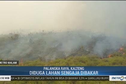 Gawat, Kebakaran Hutan di Kalimantan Diduga Dipicu Isu Perpindahan Ibu Kota