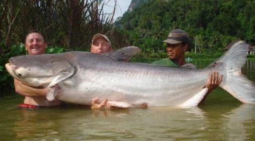 17 Arti Mimpi Ikan Besar Menyerang Anda Menurut Primbon Jawa Terlengkap