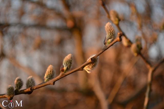 wiosna 2016, bazie