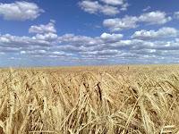 A PALAVRA DO DIA-Lança o teu pão sobre as águas Eclesiastes 11:1-6