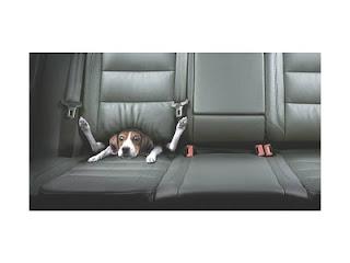 perro atrapado en asiento del carro