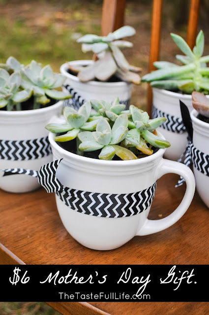 Succulent in a mug as a mother's day gift