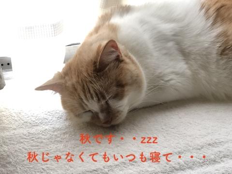 秋は眠い(年中寝てるけど)