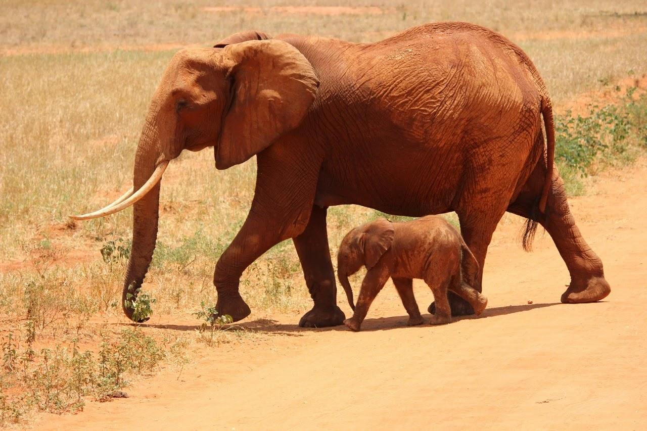 فيل جميل يضحك مع ابنة أجمل صور للفيل