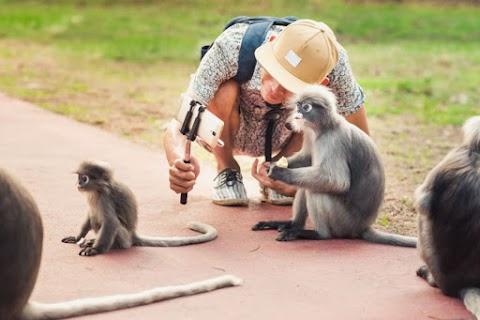 Veszélyeztetik a vadon élő állatokat a szelfiző turisták
